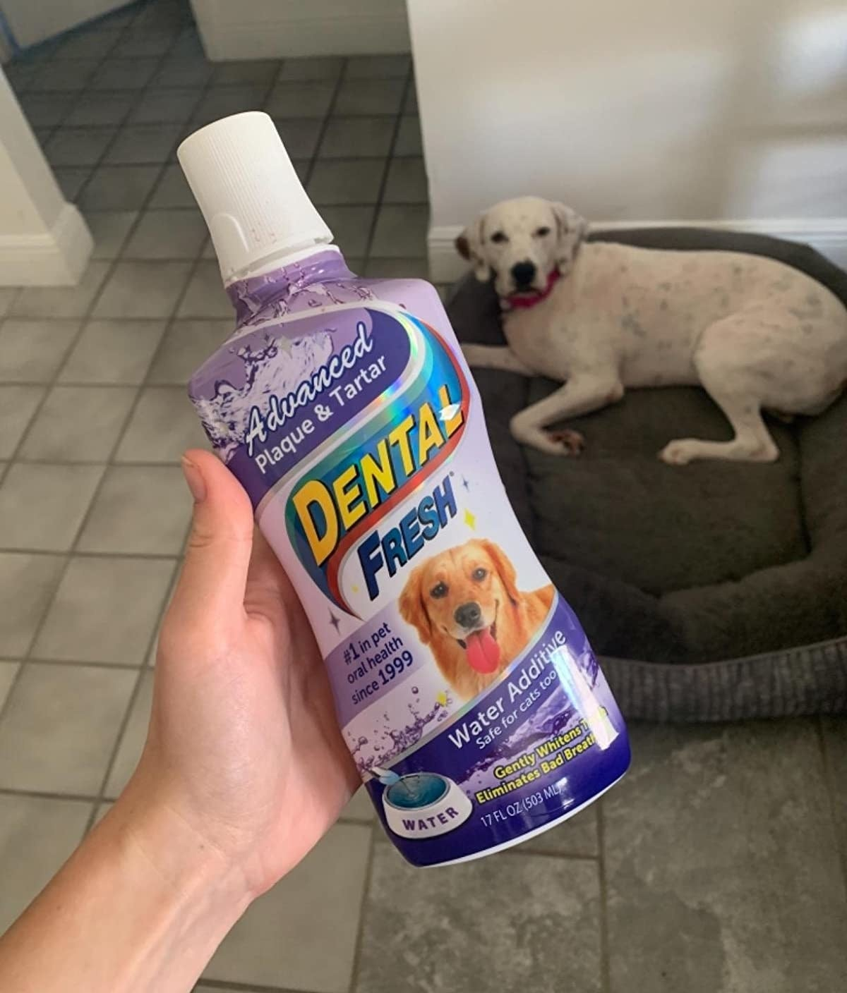a hand holding the bottle in front of a dog