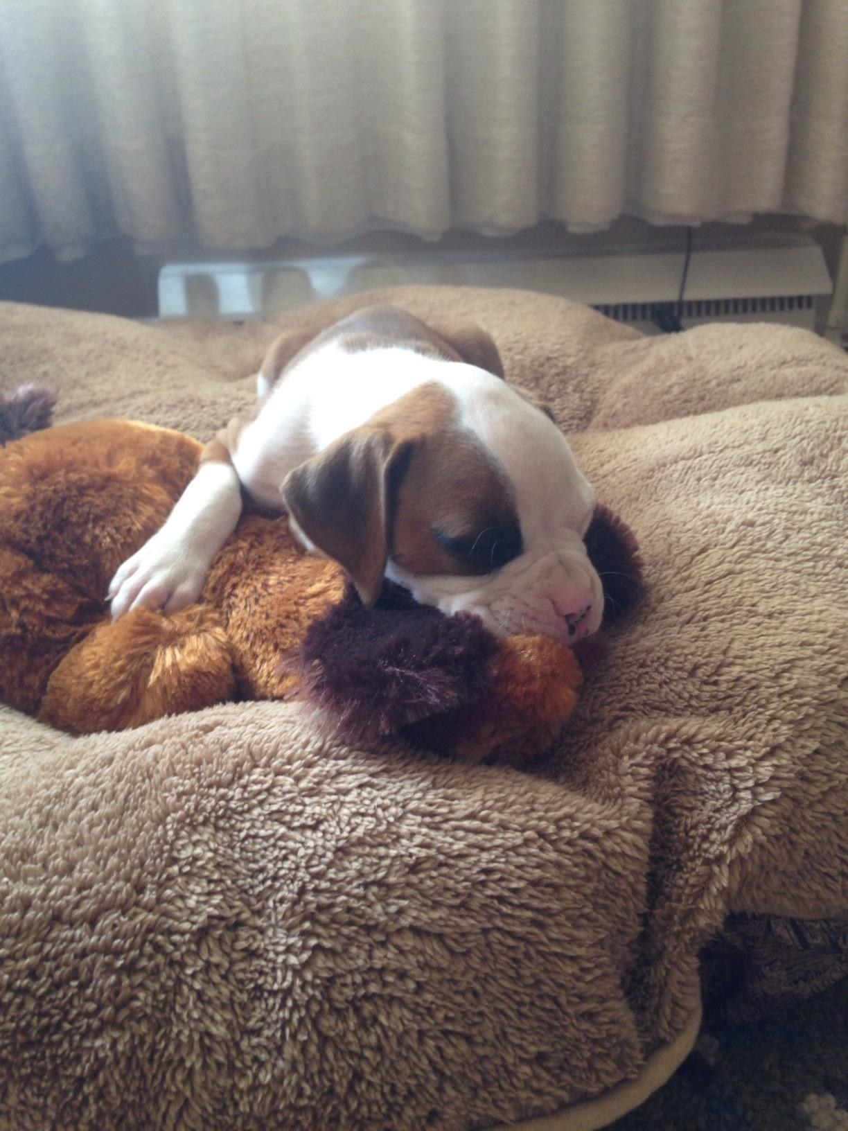 a puppy laying on top of the stuffed puppy