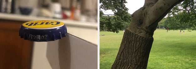 a bottle cap seemingly floating in mid-air and a tree that changes textures halfway up its trunk