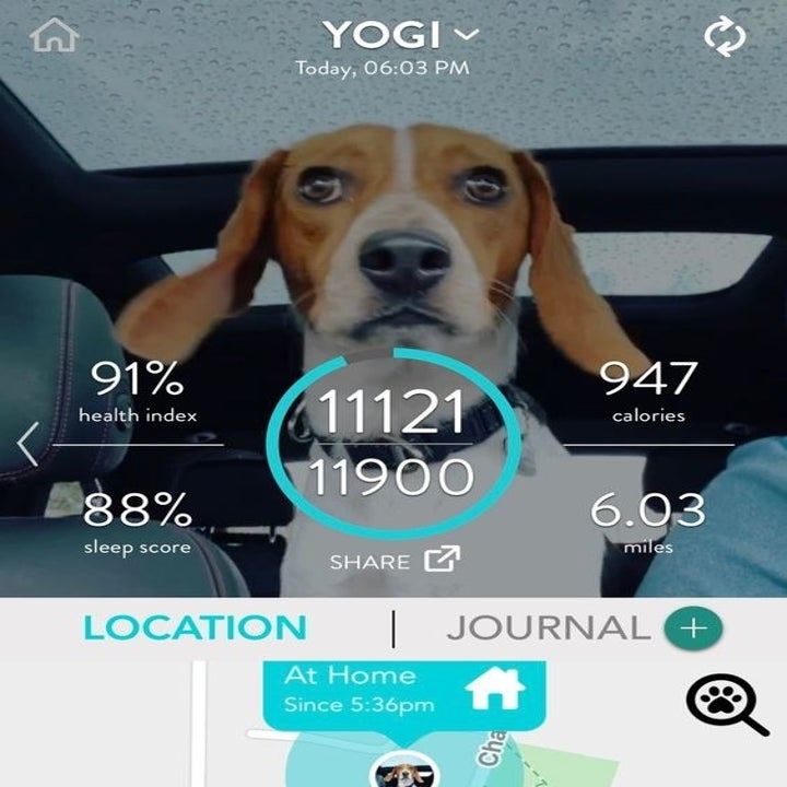 Screenshot of dog's activity and health summary from the app