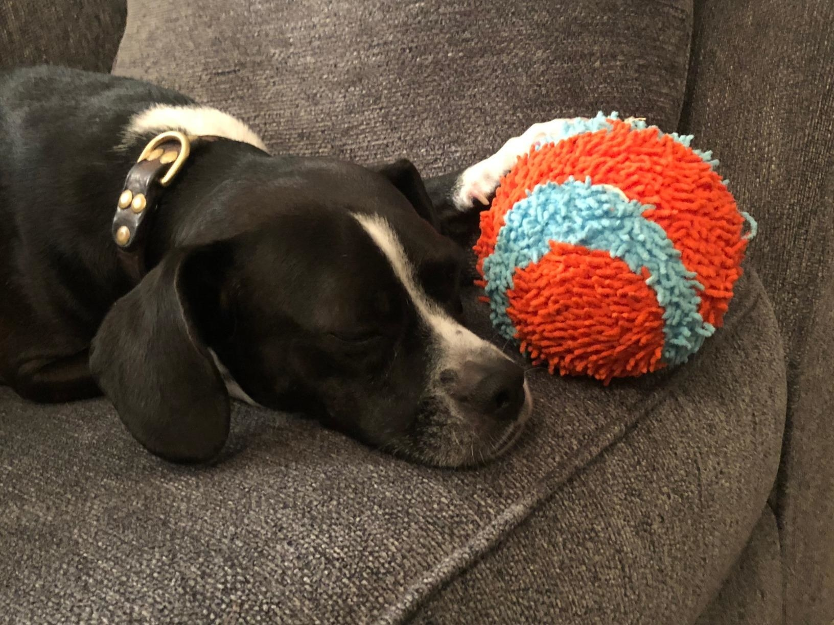 A dog with the ball, which is covered in soft, yarn-like threads