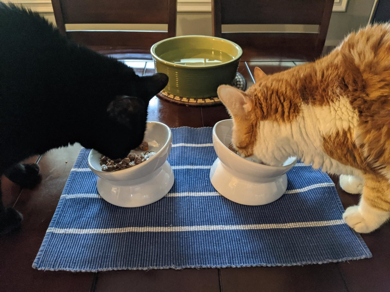 two cats eating out of the bowls