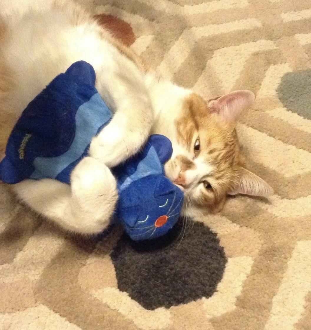A cat cuddling a toy