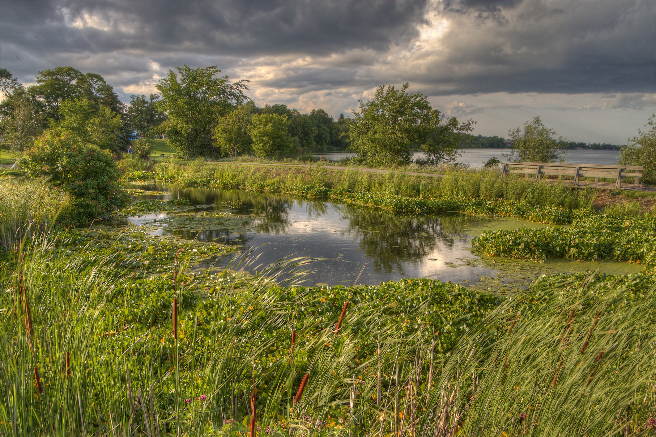 Natural marshy landscape near Bemidji, Minnesota