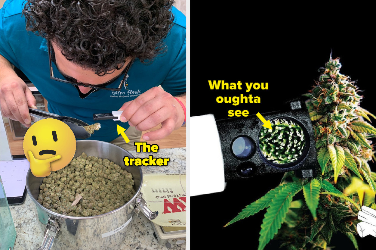 left side shows a person using the trichome tracker to look at their weed closer and right side is a pick of the close-up of the trichomes