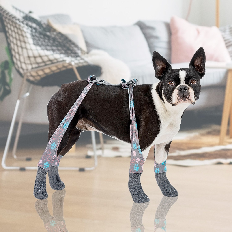 Dog wearing the indoor leggings