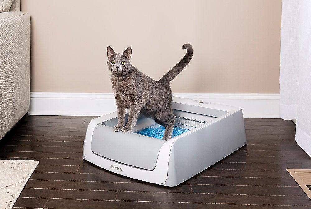 Cat using the scoop-free litter box.