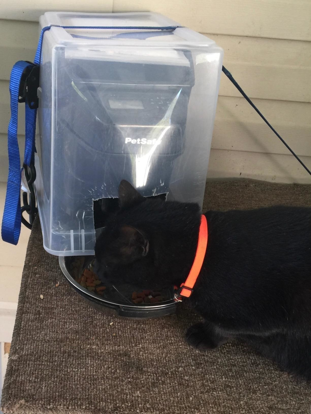 Review photo of cat enjoying the automatic food dispenser