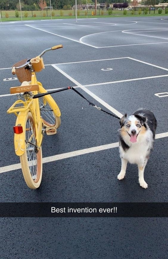 """Reviewer's dog standing next to the bike attached by the leash, with snapchat caption """"best invention ever!"""""""