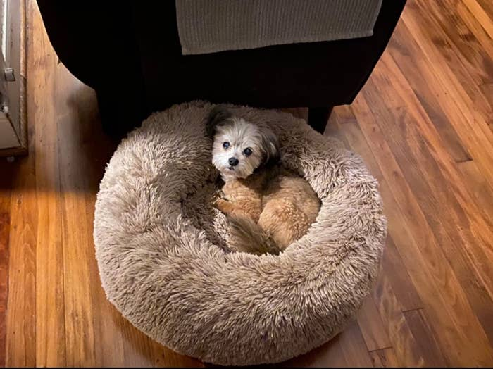 A small dog sleeping in the middle of the light brown, plush bed to show its size.