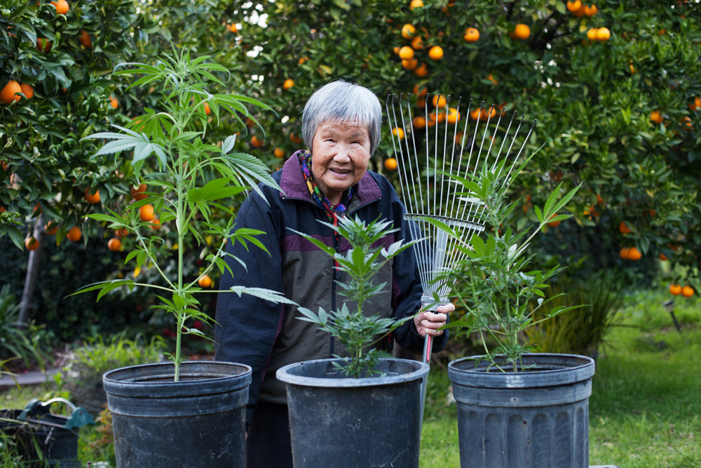 AACE photo of Asian elder with cannabis plants