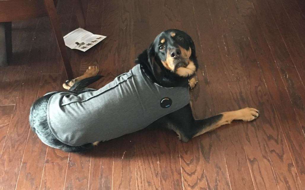 Review photo of dog wearing the anxiety jacket