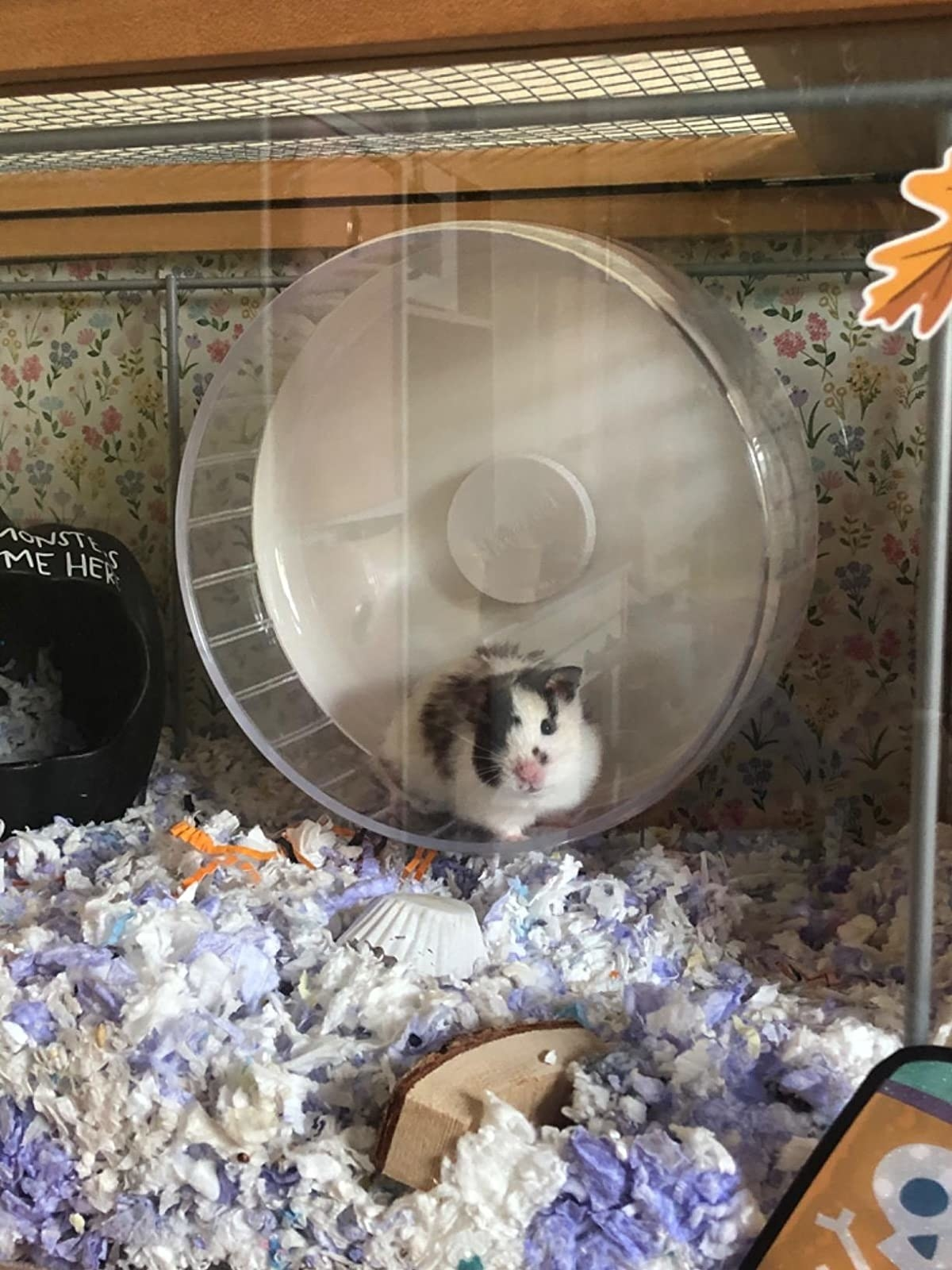 A reviewer's hamster using the acrylic wheel