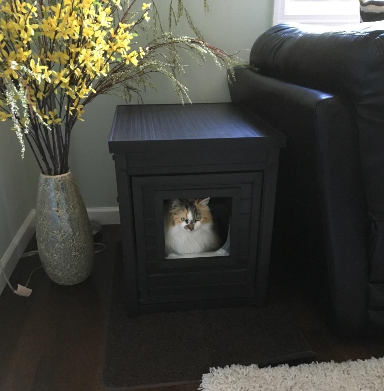 A cat inside the black enclosure