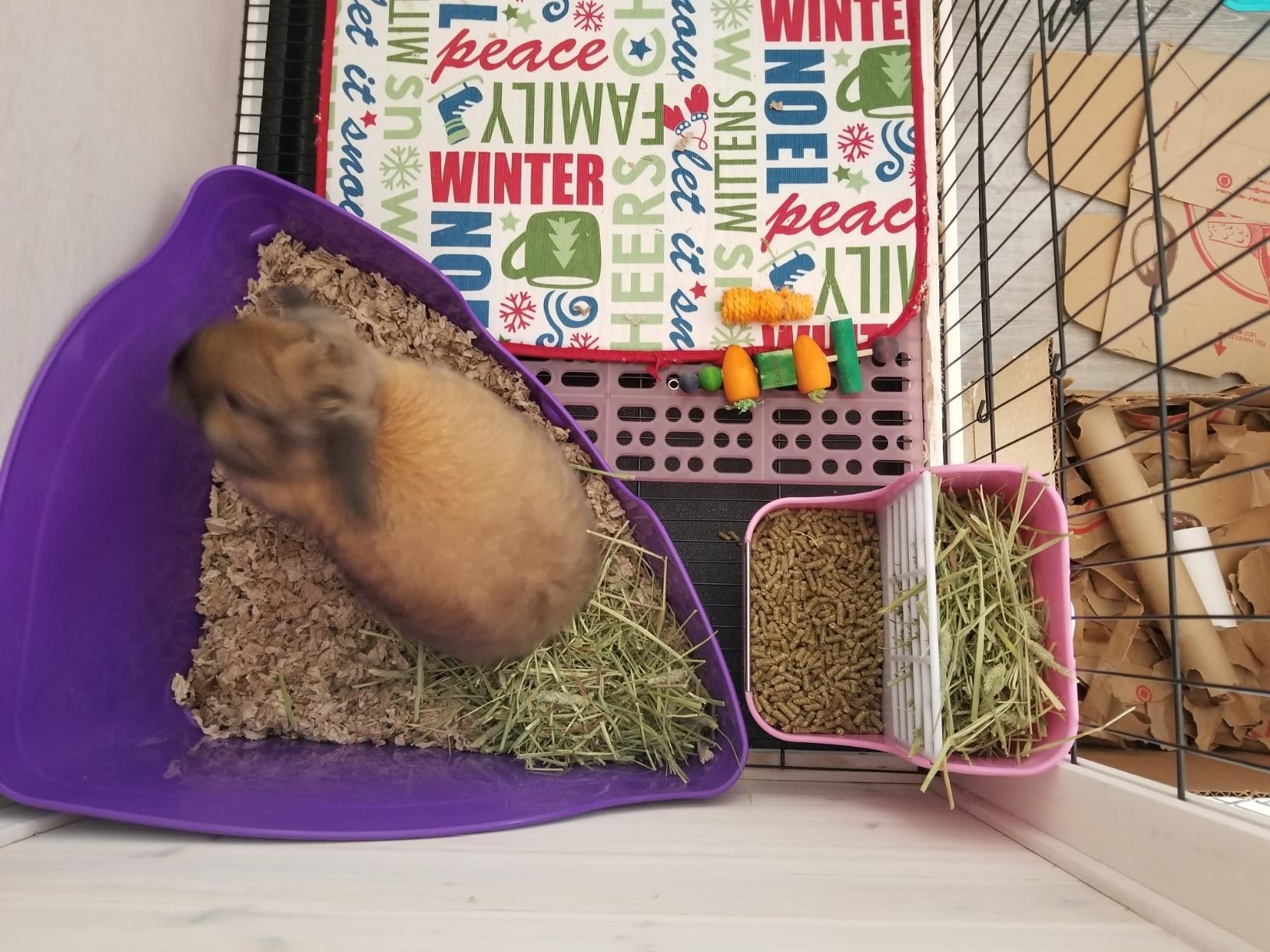 A reviewer's rabbit uses the purple pan in their cage
