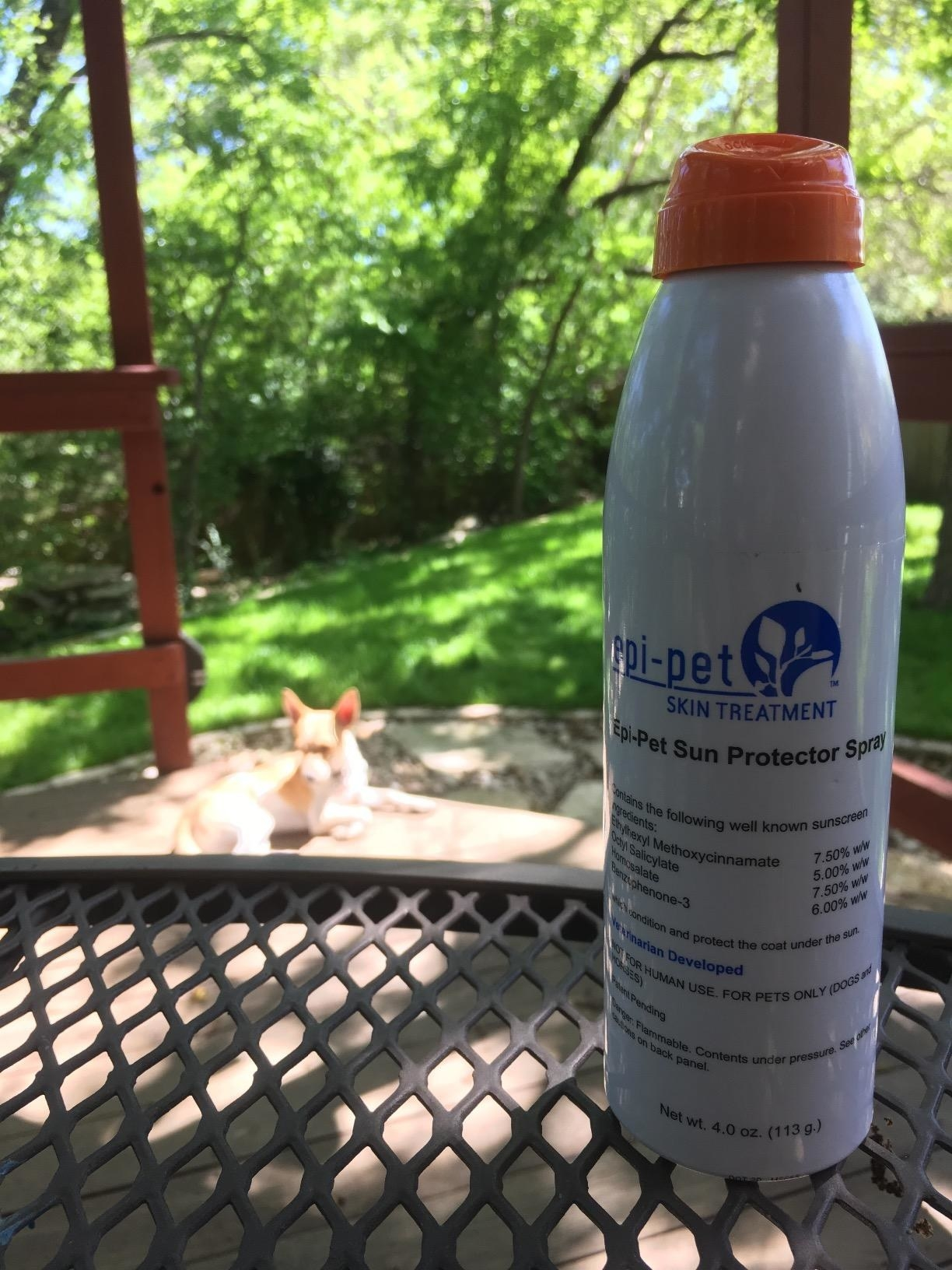 Review photo of the dog sun protector spray