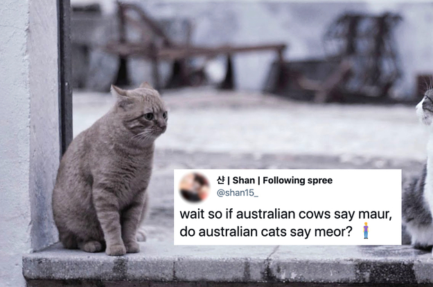 Guys, I'm Crying Over The Possibility Of Australian Animals Having Australian Accents