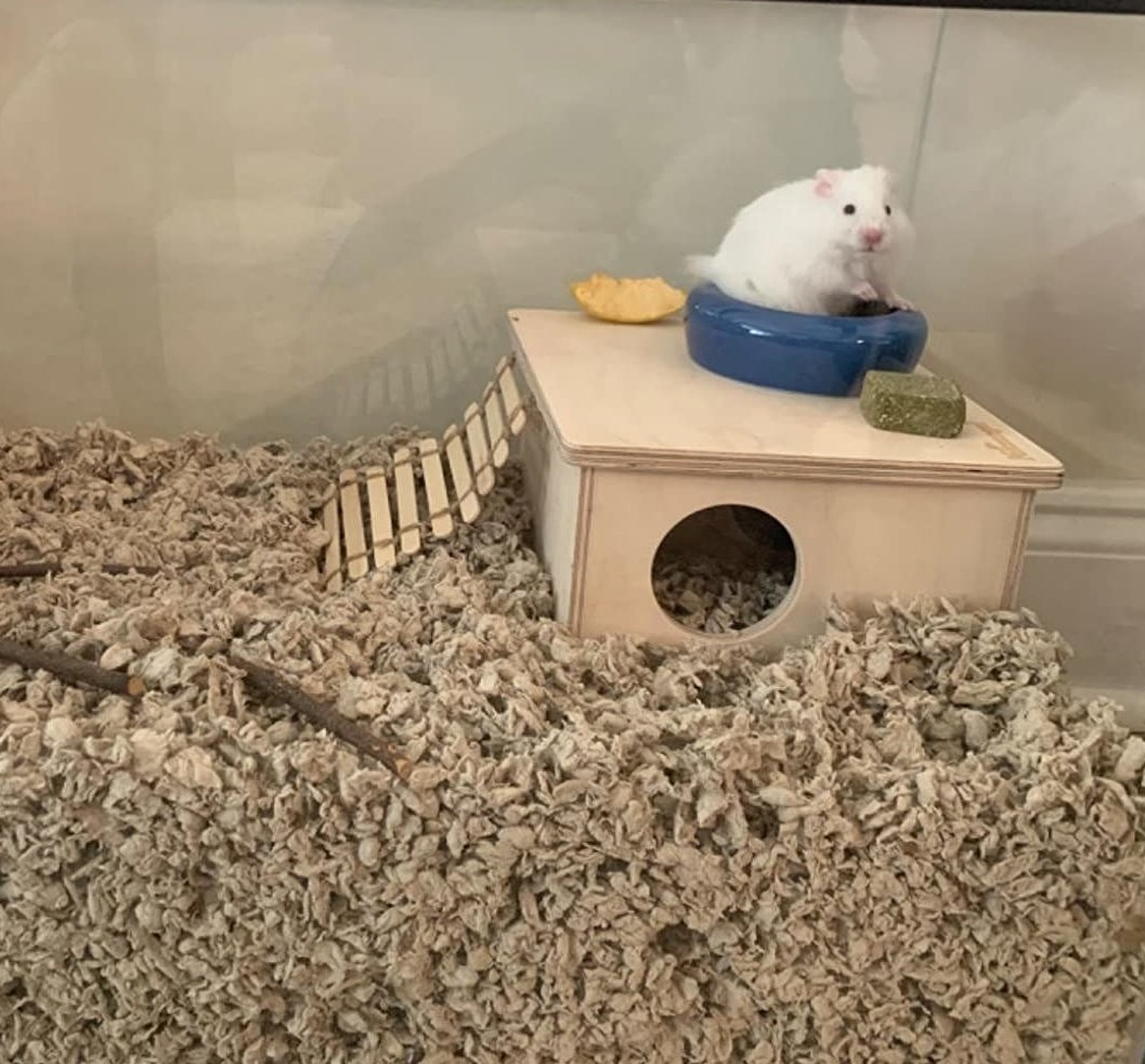 a reviewer's white hamster on top of the enclosure