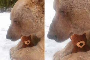 A grizzly bear holding a teddy bear