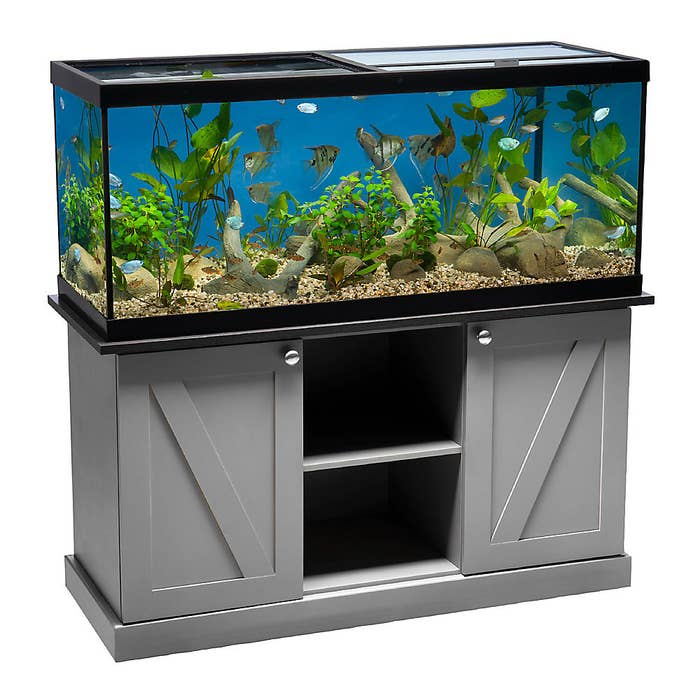 The aquarium set up with dedicated stand and LED lights