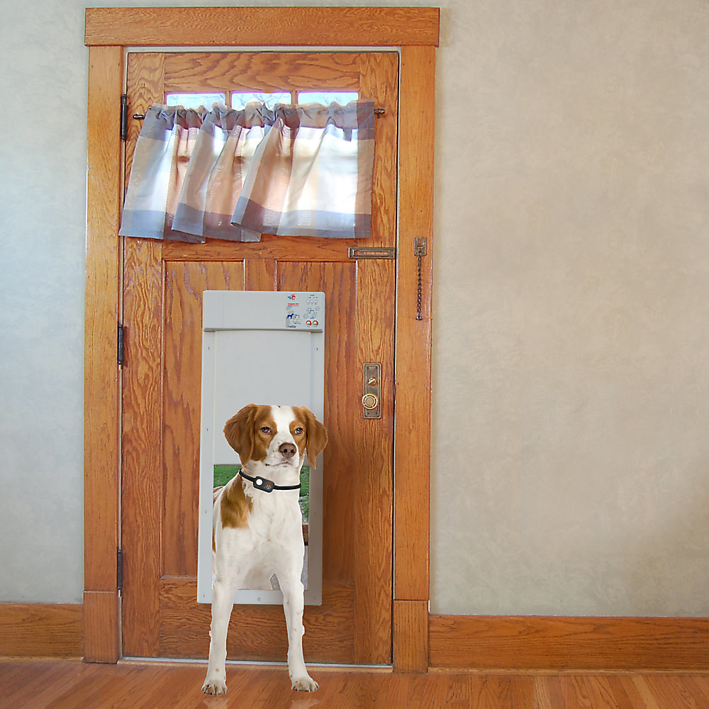 A dog uses the door