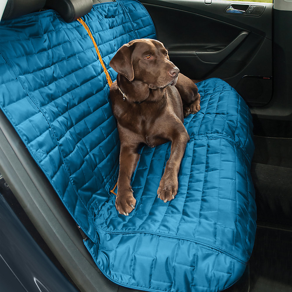 A chocolate lab sits on a blue car seat cover