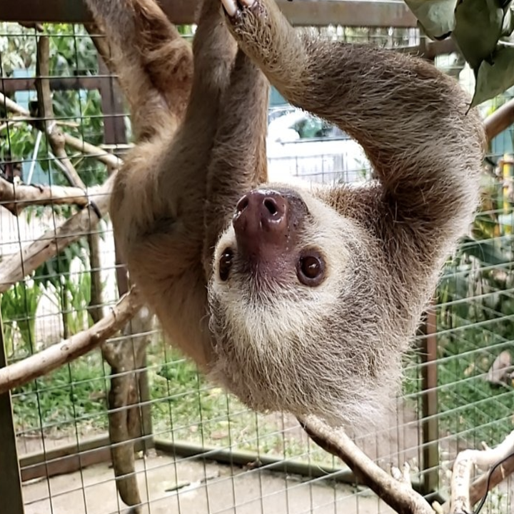 reviewer photo of sloth