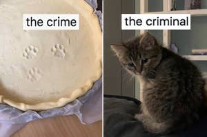 Kitten paws in a pie crust labeled