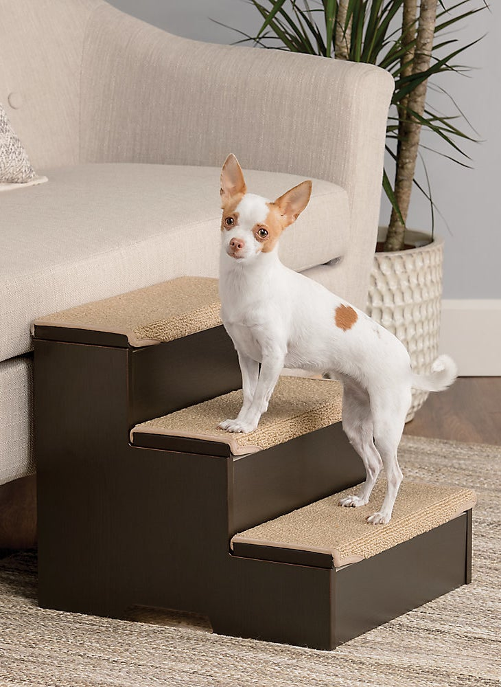 A small dog uses the brown and tan steps
