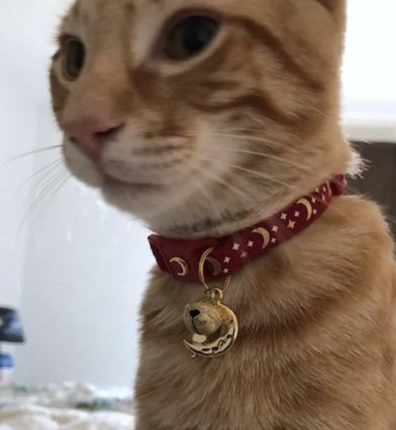 an orange cat wearing a red collar with moons on it and a bell and cresent moon charm