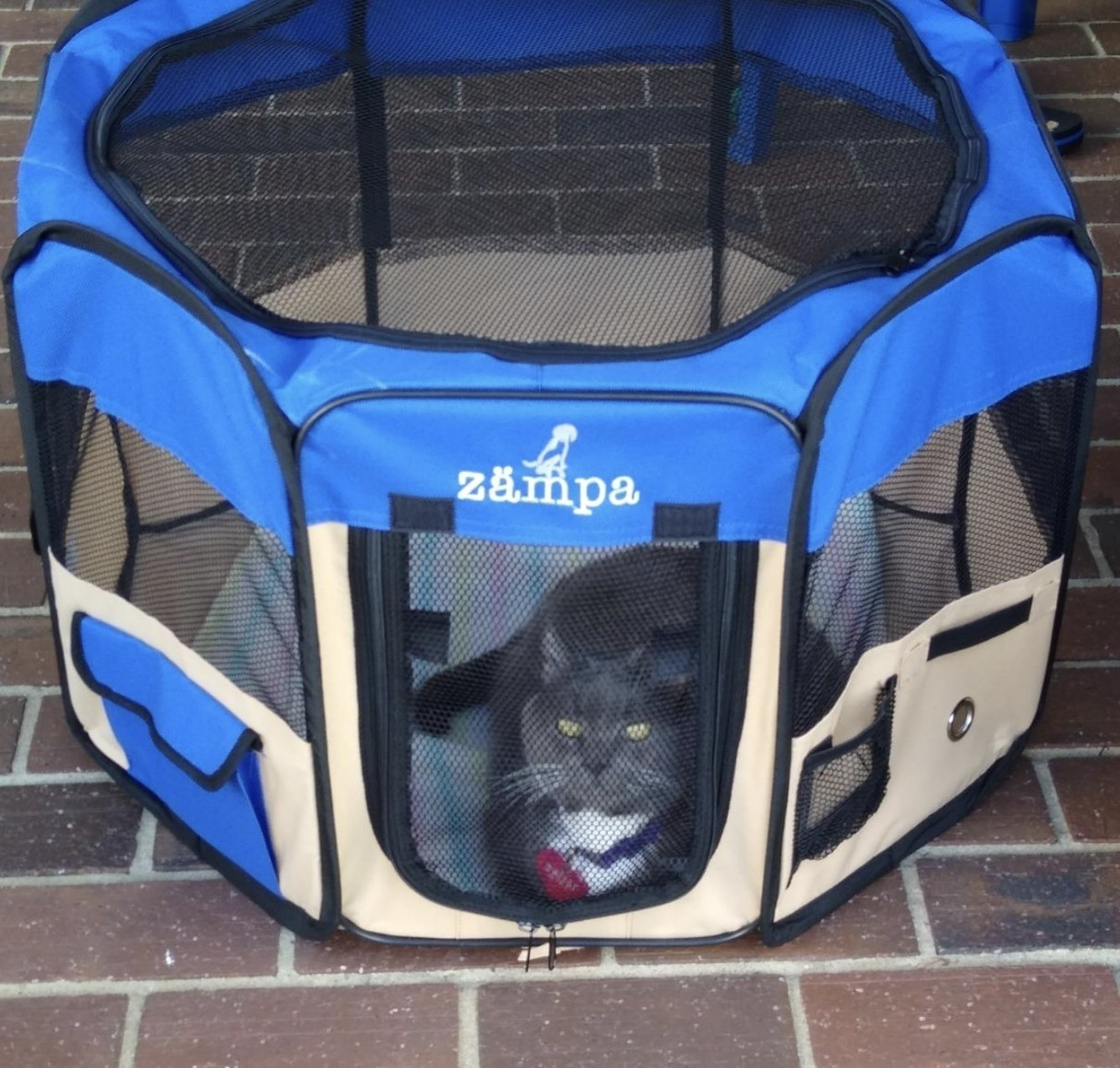 a cat resting in a portable play pen
