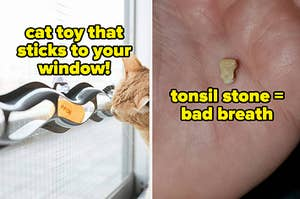 L: Snake-shaped cat toy stuck to a window that has balls inside R: Reviewer holding a tonsil stone in their palm