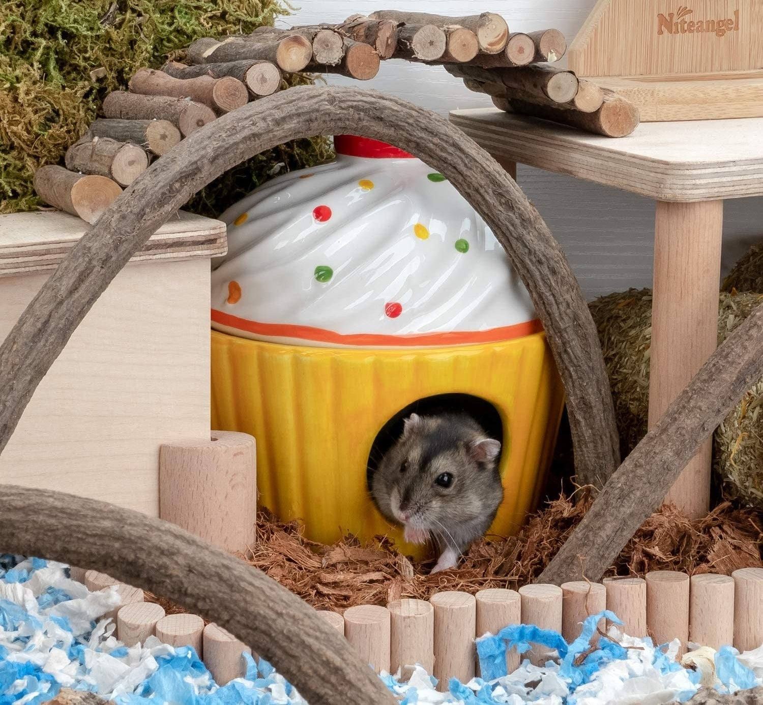 a hamster in the white and yellow cupcake enclosure