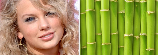 Taylor Swift and bamboo