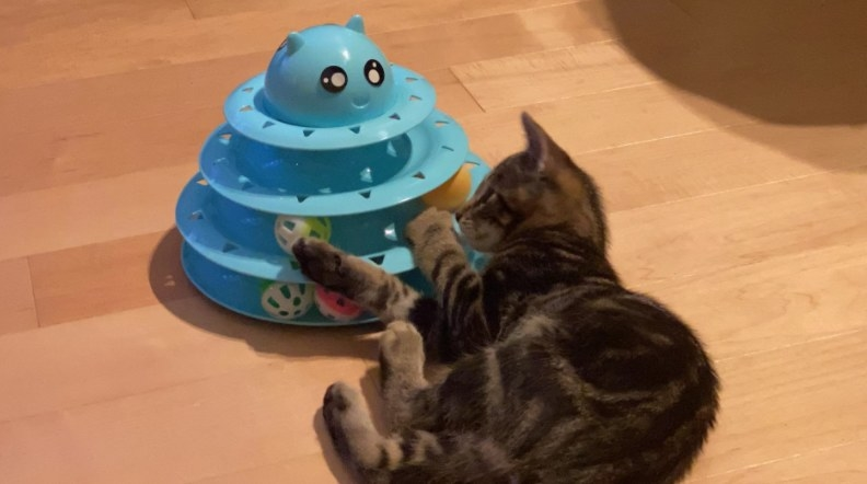 A reviewer showing her cat playing with the toy in blue with a cute face printed on top
