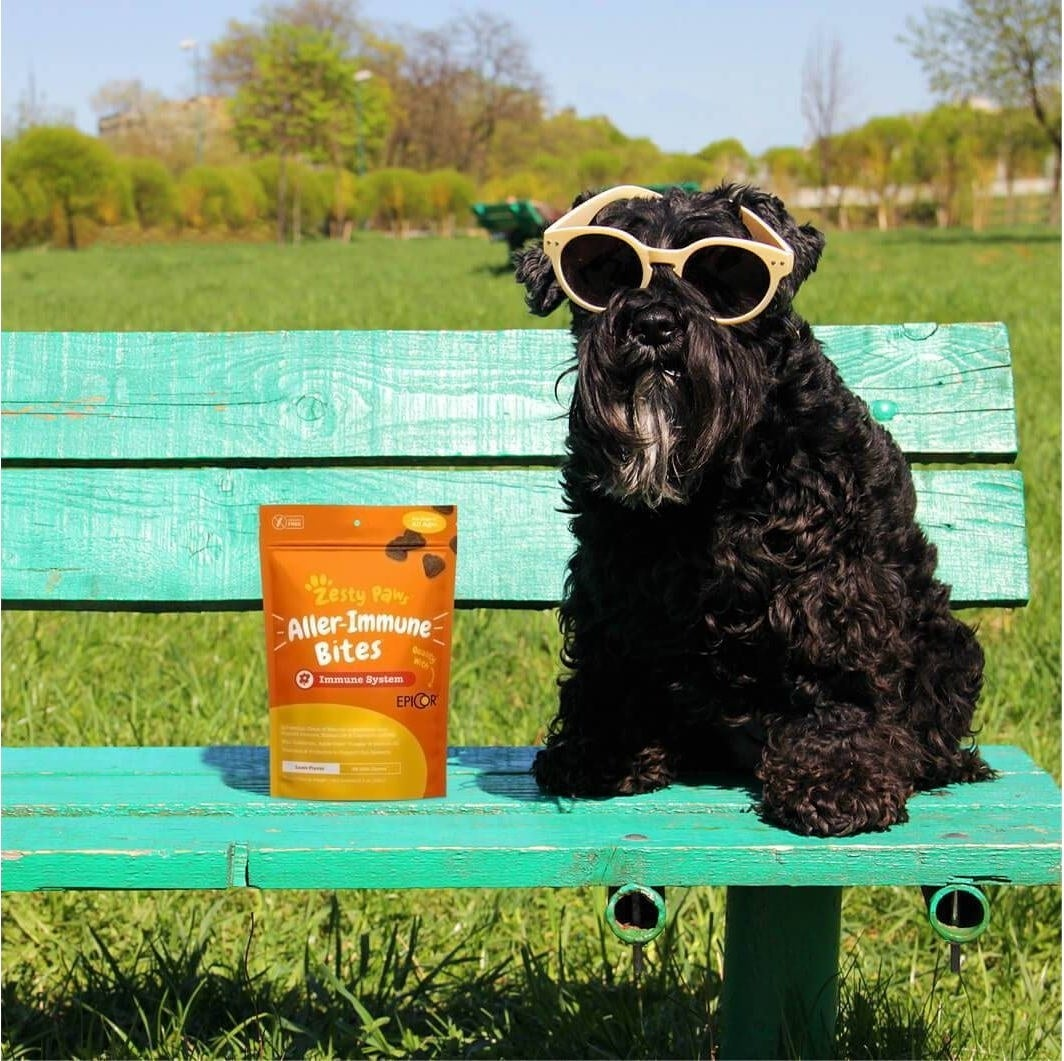 Dog sitting on a bench wearing sunglasses and sitting next to a bag of the supplement