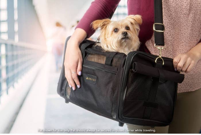Small dog sitting inside black mesh carrier