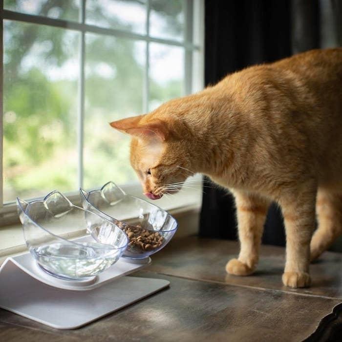 Cat enjoying the double pet bowl