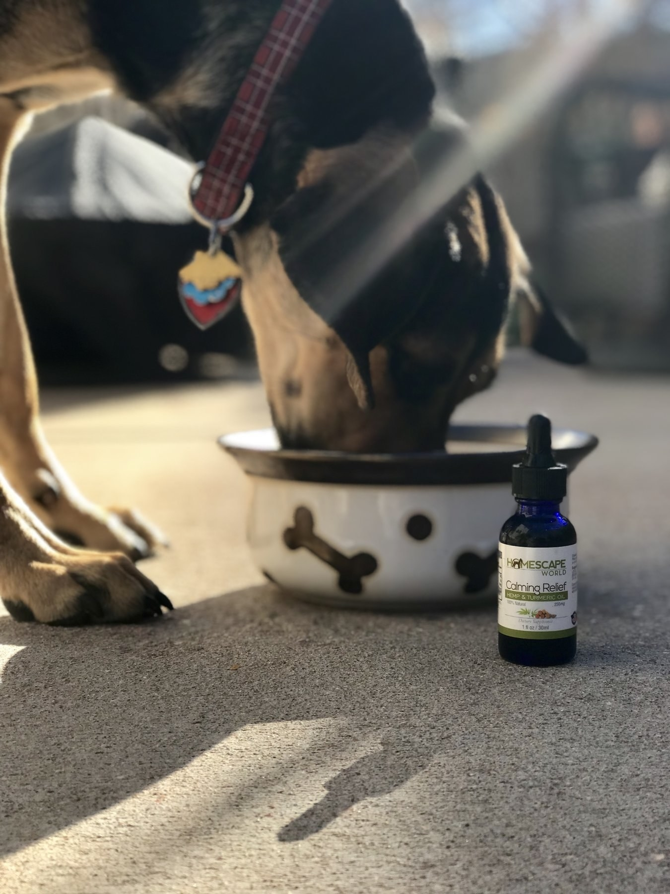 Dog enjoying the calming relief hemp and turmeric oil