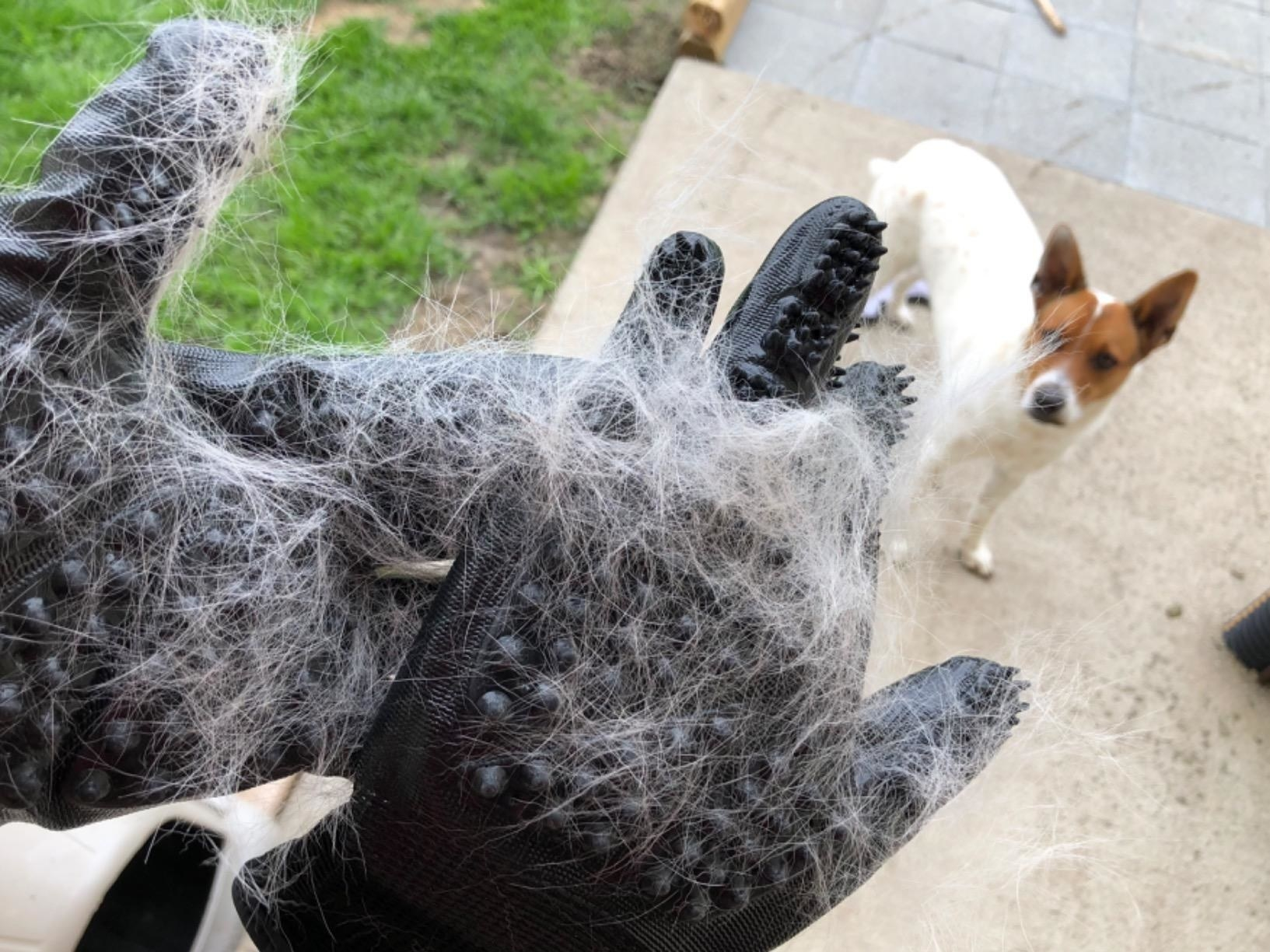 A reviewer shows off how much hair came off their dog petting it with the gloves on for just a few seconds
