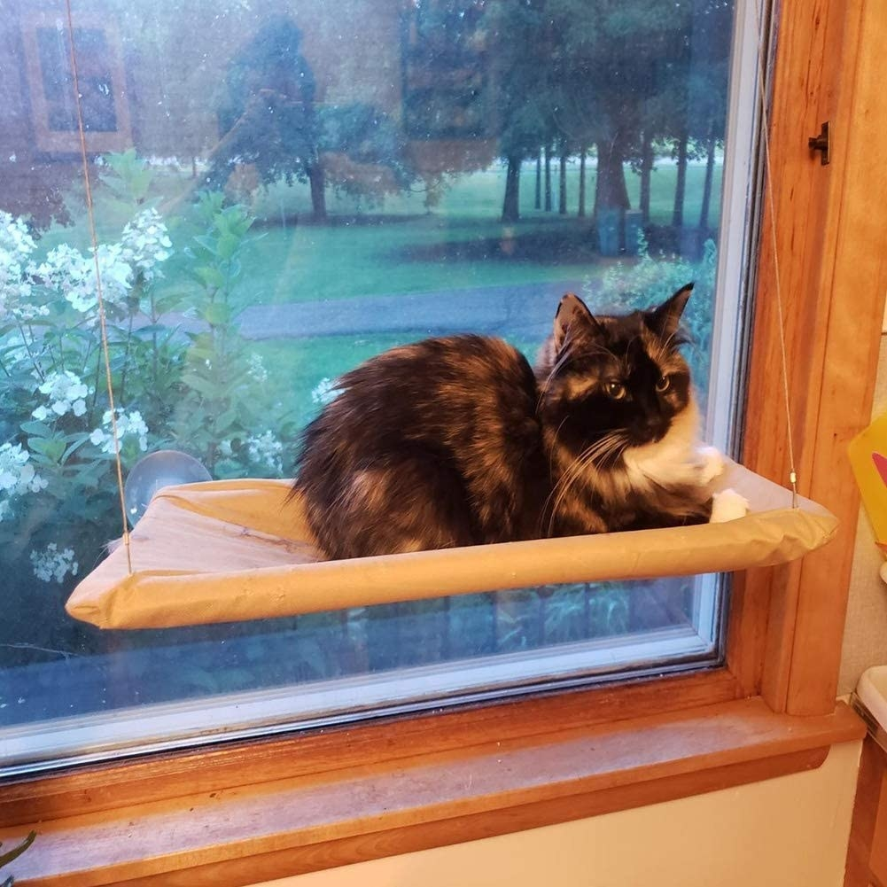 A cat on the hammock