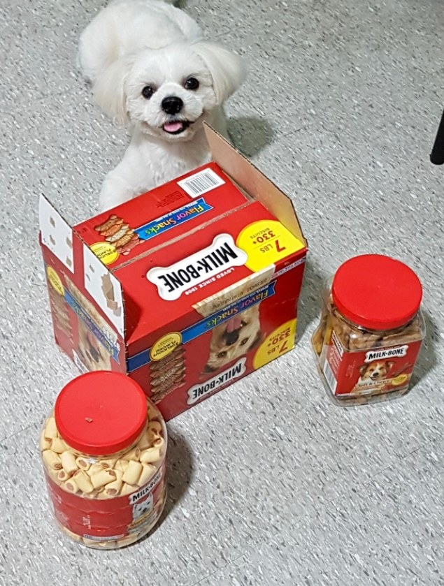 A small dog sitting beside a package of Milk-Bone treats looking happy.