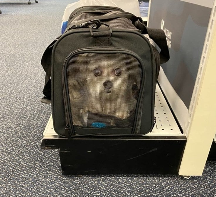 A small dog traveling inside of the pet carrier.