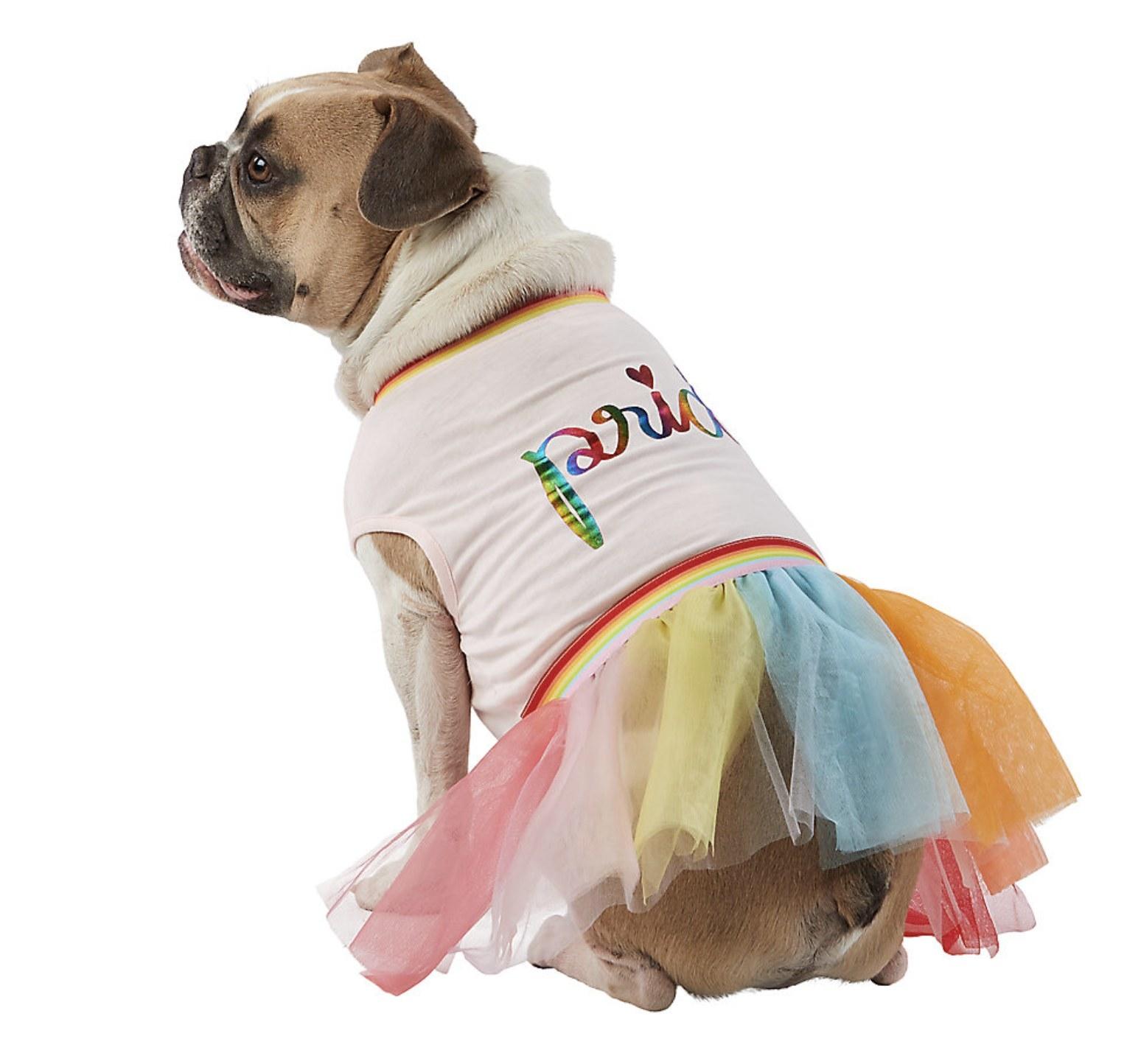 A dog wearing a pride dress