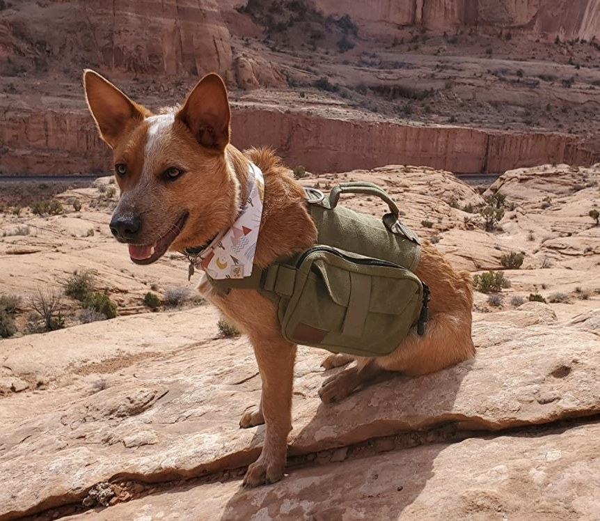 A dog wearing a backpack for hiking