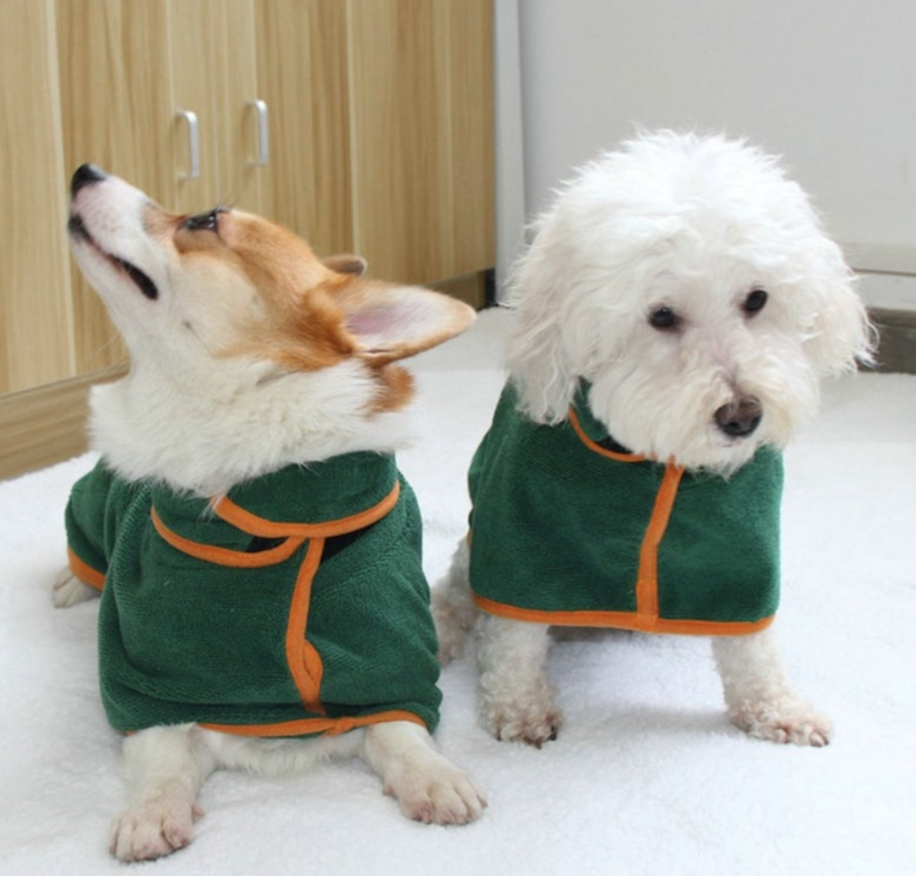 Two dogs in green bathrobes