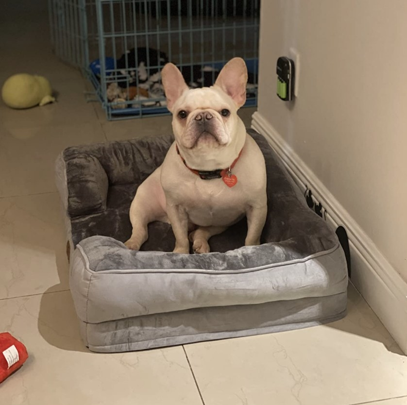 A dog sitting on a pet bed