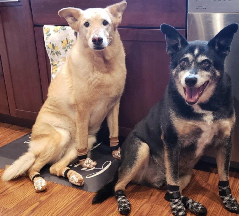 Two dogs wearing socks
