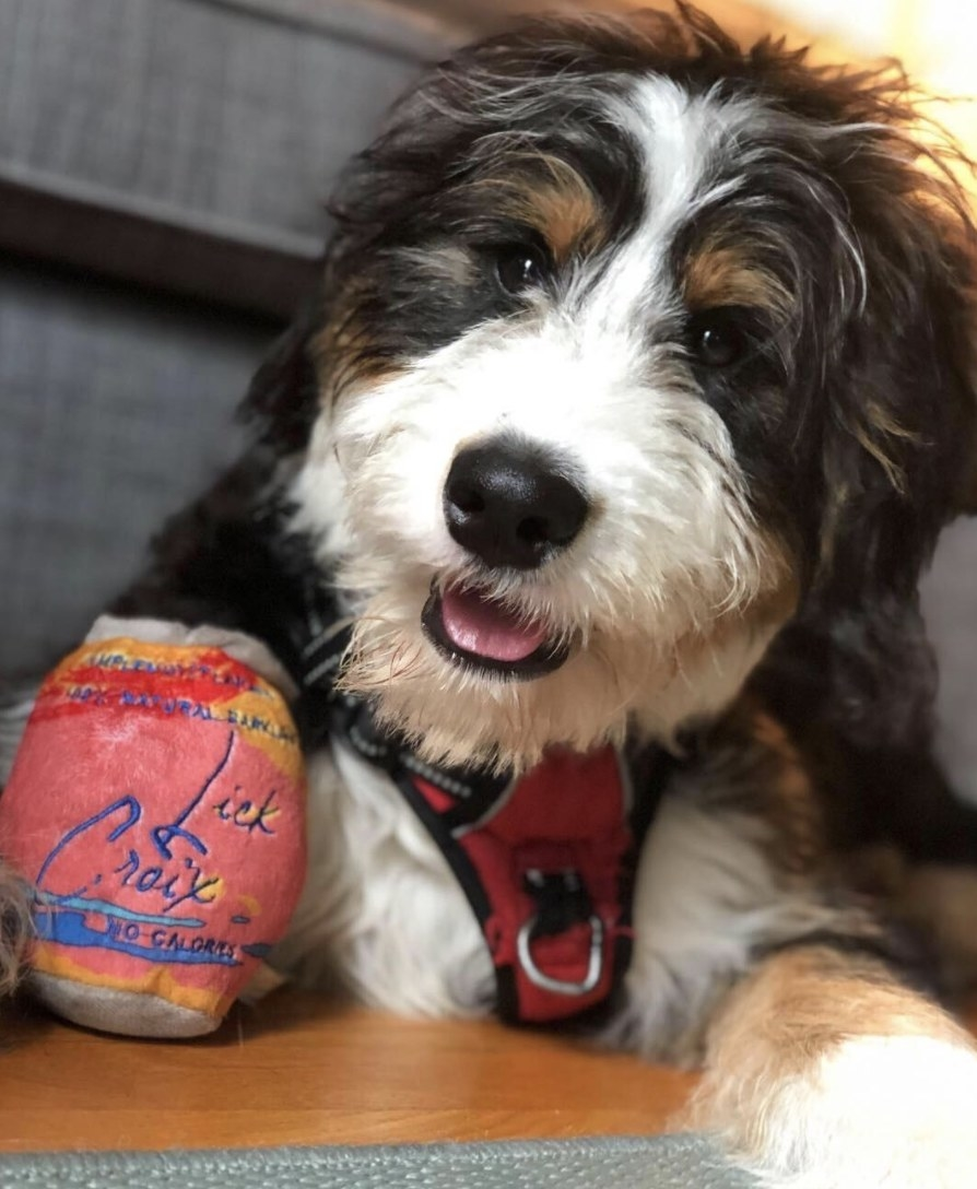 A dog next to a dog toy designed like a LaCroix can