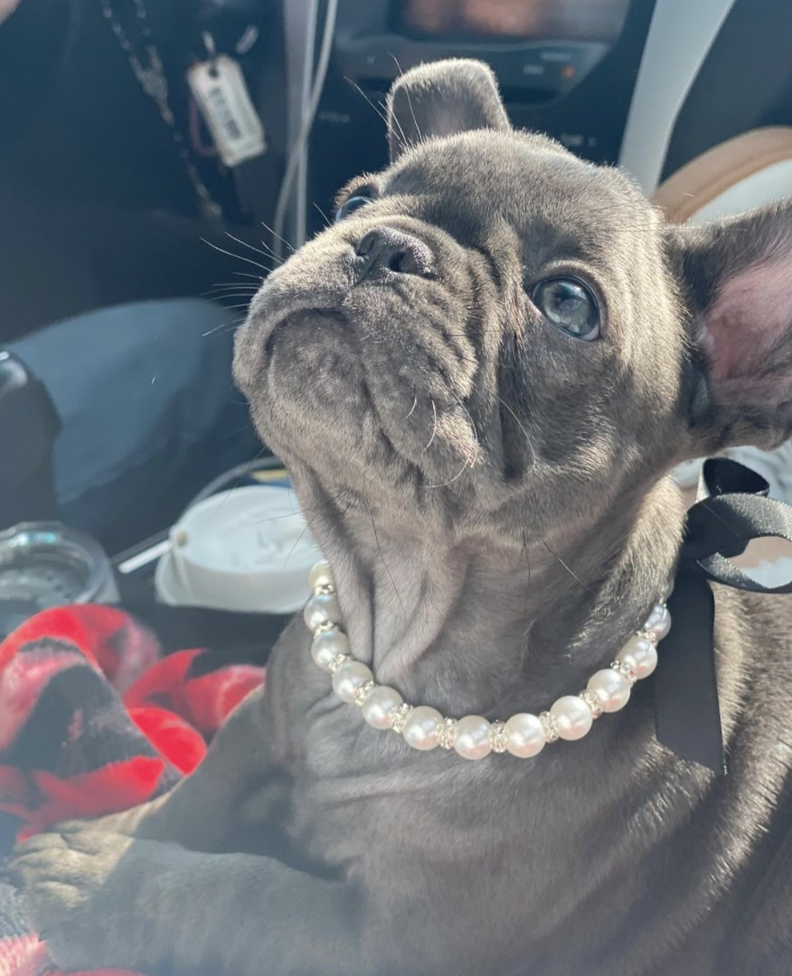 A dog wearing a pearl necklace collar